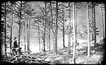 Frederick Stone negative. High Rock Grove. <br />Undated.
