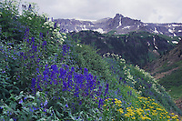 Mountains and wildflowers in Yankee Boy Basin,Tall Larkspur, Arrowleaf Ragwort, Loveroot, Ouray, San Juan Mountains, Rocky Mountains, Colorado, USA, July 2007