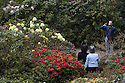 07/05/16 <br /> <br /> Visitors stop to take photographs as they stroll through the rhododendrons and azaleas which have burst into full bloom after a couple of days of sunshine, in Lea Gardens, near Matlock in the Derbyshire Peak District.<br /> <br /> All Rights Reserved: F Stop Press Ltd. +44(0)1335 418365   +44 (0)7765 242650 www.fstoppress.com