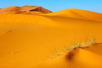 Merzouga, Morocco.  Saharan Sand Dunes.