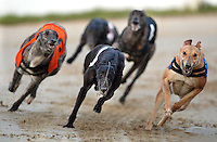 Greyhound Racing 2009-01