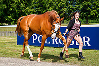 GBR-Amy Hulls presents Liquido van de Bucxtale during the First Horse Inspection for the CCI-L2* Section D.  2019 GBR-Saracen Horse Feeds Houghton International Horse Trial. Wednesday 22 May. Copyright Photo: Libby Law Photography
