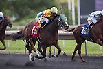 ARLINGTON HEIGHTS,IL-AUGUST 13: Yo Charm,ridden by Jose Lezcano,wins the Bruce D. Memorial Stakes at Arlington International Race Track on August 13,2016 in Arlington Heights,Illinois (Photo by Kaz Ishida/Eclipse Sportswire/Getty Images)