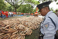 A policeman looks on as five tonnes of confiscated ivory from the Philippines stockpile since 2009 is destroyed by excavator at the Philippines Government Protected Areas and Wildlife Bureau of the Department of Environment and Natural Resources, Quezon City, Manila, Philippines, 21 June 2013.