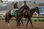 """DEL MAR, CA  JULY 28: #5 Paradise Woods, ridden by Mike Smith,, in the post parade before the Clement L Hirsch Stakes (Grade 1) a Breeders' Cup """"Win and You're In"""" Distaff Division (Photo by Casey Phillips/Eclipse Sportswire/CSM)"""