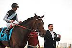 Amira's Prince with jockey John Velazquez winning the Mac Diarmida (G2T) at Gulfstream Park . Gulfstream Park. Hallandale Beach Florida. 02-16-2013
