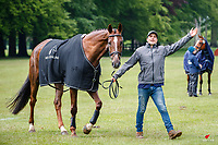 NZL-James Avery presents Goldfinger during the CCI-L 3* First Horse Inspection. 2021 GBR-Saracen Horse Feeds Houghton International Horse Trials. Hougton Hall. Norfolk. England. Wednesday 26 May 2021. Copyright Photo: Libby Law Photography