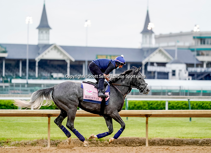 April 28, 2021: Maracuja exercises in preparation for the Kentucky Oaks at Churchill Downs on April 29, 2021 in Louisville, Kentucky. Scott Serio/Eclipse Sportswire/CSM