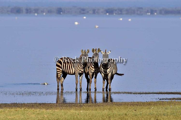 AFRICA 2019 LAKE MANYARA