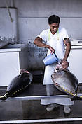 A worker washes the sustainably caught yellow fin tuna at the Casa, the Tuna buying house in Puerto Princesa, Palawan in the Philippines. <br /> Photo: Sanjit Das/Panos for Greenpeace
