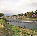 A man fishes in the Kamo river with Cherry Blossoms.<br /> <br /> Un homme pêche dans la rivière Kamo avec des fleurs de cerisier.