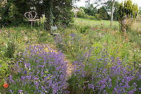 English lavender and flowers in garden with rustic chair