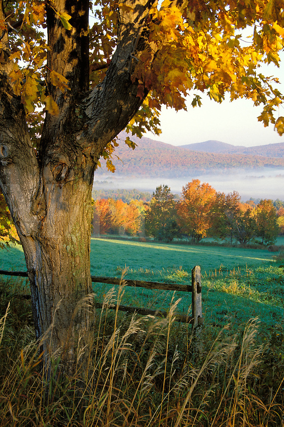 Pasture framed by maple tree at sunrise, Danby Four Corners, Rutland County, Vermon