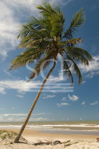 Ilheus, Bahia State, Brazil. Southern beaches. Single leaning palm tree on the beach.