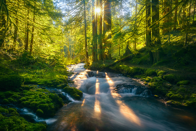 Sunbeams burst through trees of this old growth forest with cascading natural springs, as the sun rises in early spring.<br />