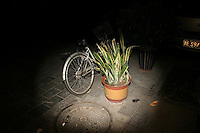 CHINA. Beijing. A potted plant and a bicycle in the street. 2008