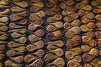 France, Indre-et-Loire (37), Rivarennes, poires tapées à l' ancienne - spécialité locale de poires séchées au four à bois  chez  Philippe Blot: Reines de Touraine  // France, Indre et Loire, Rivarennes, poires tapees (local and traditional dryed pears on wood stove)