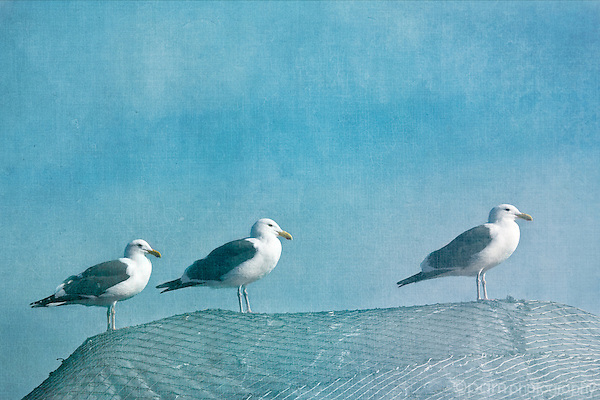 Three seagulls on a fishing net