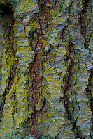 Tree Bark Detail, Shaw Island, Washington, US