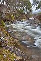 River cutting through caledonian pine forest, Braemar, Cairngorms National Park, Grampian Mountains, Scotland, UK, February.