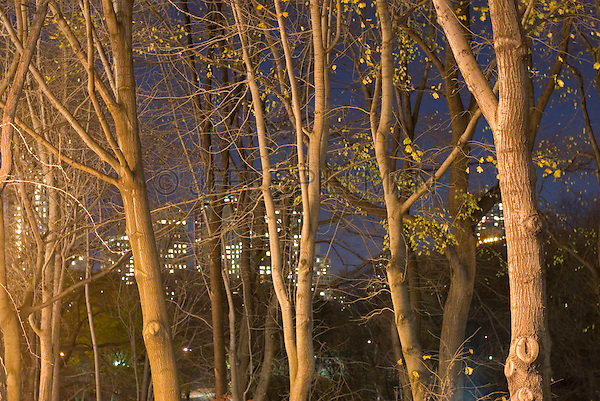 Illuminated Buildings on Manhattan's Upper West Side seen thru trees and fall foliage in Central Park, Midtown Manhattan, New York City, New York State, USA
