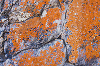 Rock with lichens, Rio Grande Valley,Texas, USA