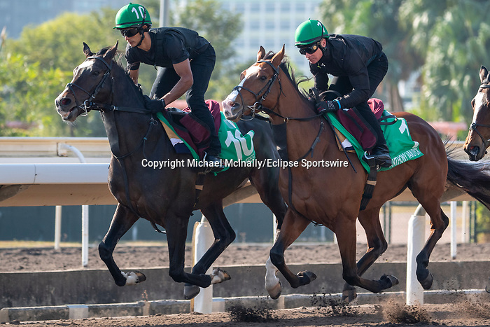 SHA TIN, HONG KONG – December 4: Mount Everest(Left), Anthony Van Dyck (Right) at trackwork on December 4 at Sha Tin Race Course in Hong Kong before starting in the Longines Hong Kong Vase. Michael McInally/Eclipse Sportswire/CSM