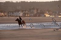 Europe/France/Normandie/14/Calvados/Deauville: Cheval et cavalier sur la plage dans la lumière du soir