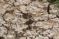 29-4-2021 Large cracks in the ground due to drought conditions <br /> ©Tim Scrivener Photographer 07850 303986<br />      ....Covering Agriculture In The UK....