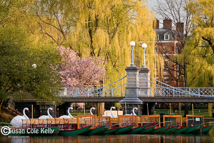 Swan boats in the Boston Public Garden, Boston, MA, USA