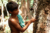 Acre State, Brazil; young rubber tapper tapping a tree.