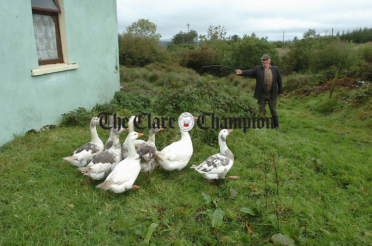 John Sweeney of Bulenaska, Kilmaley driving in some geese for his negighbour Mrs Lynch earlier this week. Photograph by John Kelly.