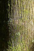Fazenda Bauplatz, Brazil. Atlantic Forest tree bark with moss and lichen.