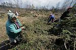 Foto: VidiPhoto..TATRANSKA LOMNICA - Bij het Slowaakse dorp Tatranska Lomnica probeert de plaatselijke bevolking -vooral bejaarden met een kleine uitkering- wat bij te verdienen door te helpen met het ruimen van miljoenen omgewaaide bomen. Tijdens een enorme orkaan november vorig jaar is zo'n 80 procent van de bossen bij het gebergte de Hoge Tatra's verwoest. Het duurt jaren voordat de gevolgen van deze natuurramp zijn opgeruimd. Het hout, meest naaldbomen, is vrijwel alleen geschikt voor de kachel.
