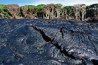 Lava fields, Hawaii Volcanoes National Park, Big Island