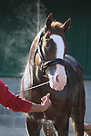 Morning Workouts - Will Take Charge  bath