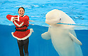Hakkeijima Sea Paradise aquarium Christmas 2020