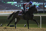 March 25, 2021: Gold Cup contender Walderbe (GER) trains on the track for trainer Ralf Rohne at Meydan Racecourse, Dubai, UAE.<br />