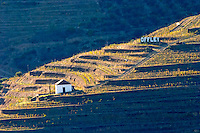 vineyard hut offley sign douro portugal