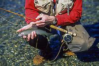Fly fisherman holds Arctic grayling, Chatanika river, Fairbanks, Alaska