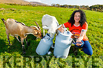 Angela O'Hanlon of Dingle Goats Cheese in Inch, who took Gold for the second year in a row at the recent Blas na hÉireann Irish Food Awards