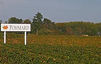 Vineyard. Pommard. Burgundy, France