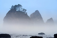 Giants Graveyard sea stack on Washington Coast in fog, near Strawberry Point, Olympic National Park, Washington, USA