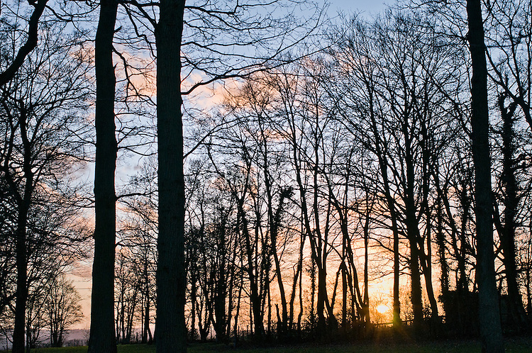 Trees silhouetted at sunset.