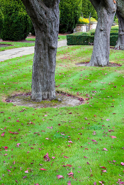 Sunken Trench Edging around garden tree roots in lawn landscaping neat
