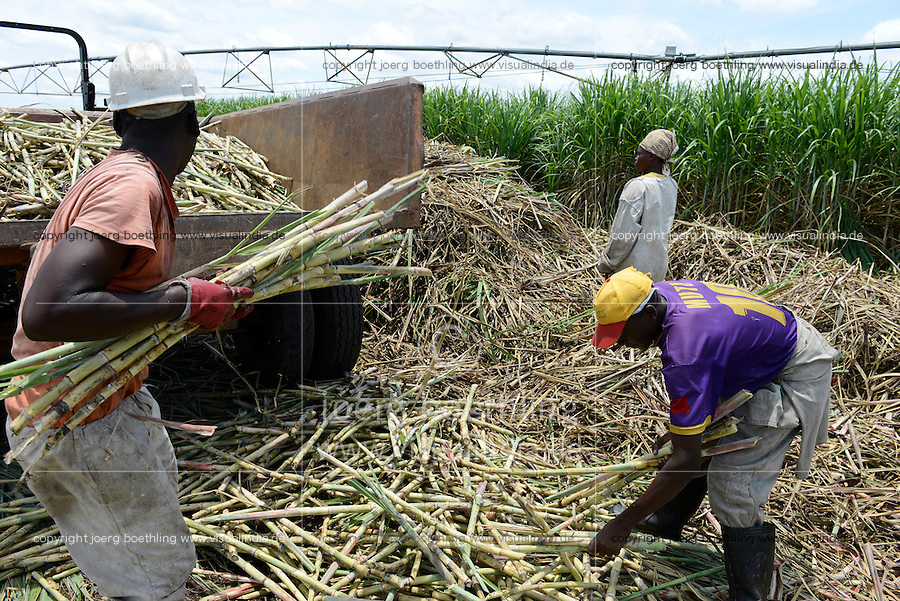 MOZAMBIQUE, Lamego, BAGC Beira agricultural growth corridor, 450 hectares sugar cane plantation of south african company Tongaat Hulett, the sugar is processed in a sugar factory in Mafambisse / MOSAMBIK, Lamego, BAGC Beira agricultural growth corridor, 450 Hektar Zuckerrohr Farm der suedafrikanischen Firma Tongaat Hulett