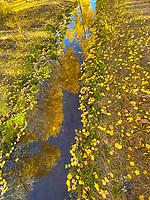 Aspen reflected in stream, Manti-La Sal National Forest, Utah