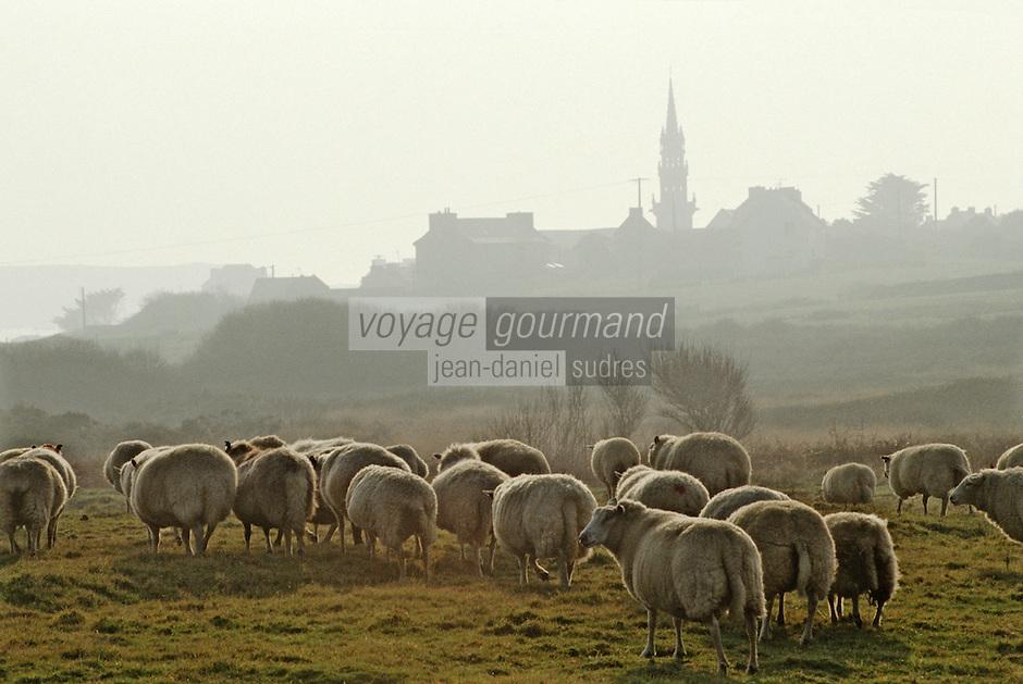 Europe/France/Bretagne/29/Finistère/Ile d'Ouessant: Fête des moutons, rabattage des moutons