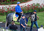 LOUISVILLE, KY - MAY 04: Mohaymen, trained by Kiaran McLaughlin and owned by Shadwell Stable, exercises and prepares during morning workouts for the Kentucky Derby and Kentucky Oaks at Churchill Downs on May 4, 2016 in Louisville, Kentucky. (Photo by Scott Serio/Eclipse Sportswire/Getty Images)