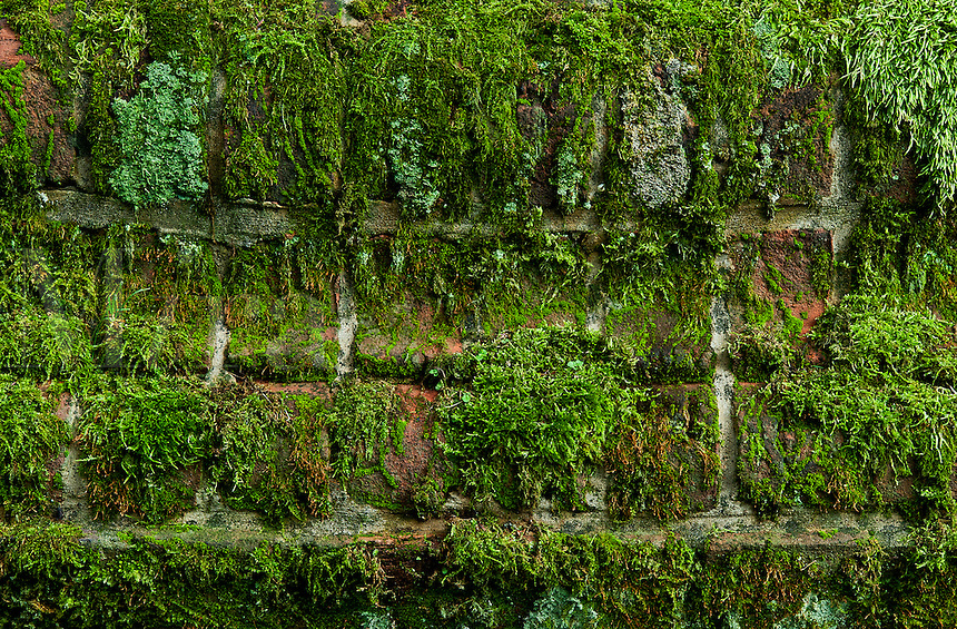 Moss covered brick wall.